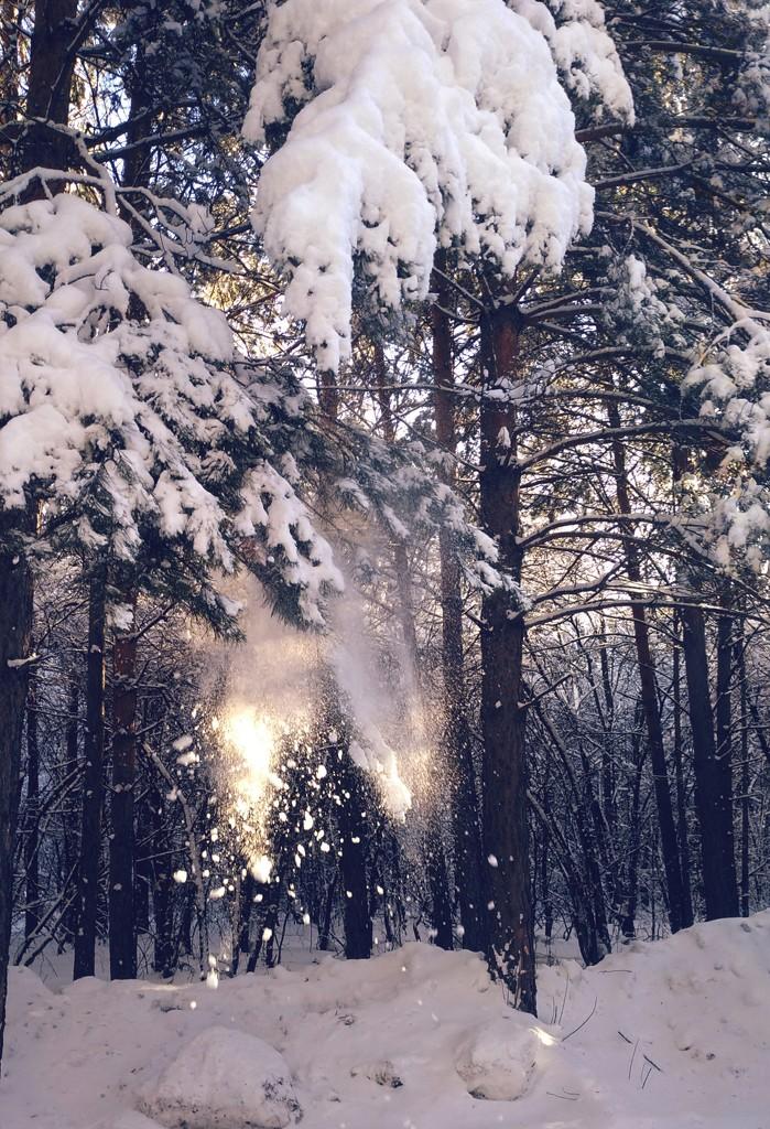 Осыпается снег в лучах солнца  by natalytry