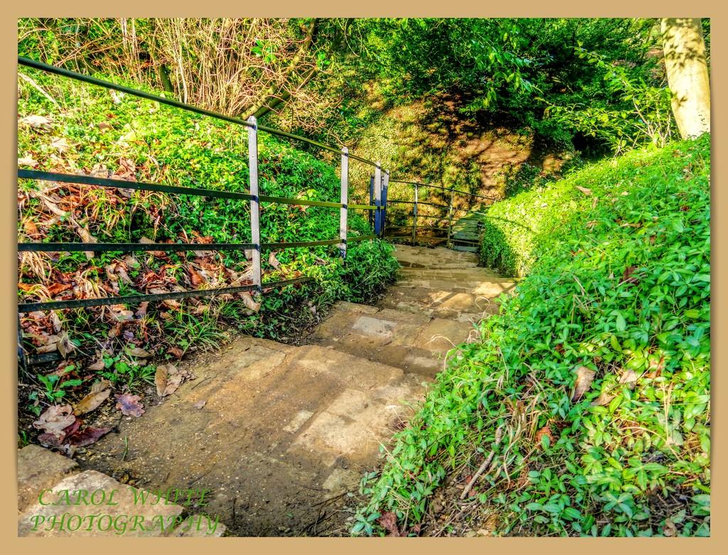 A Long Way Down by carolmw