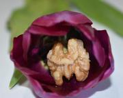 11th Feb 2020 - Beautiful outside, nutty inside
