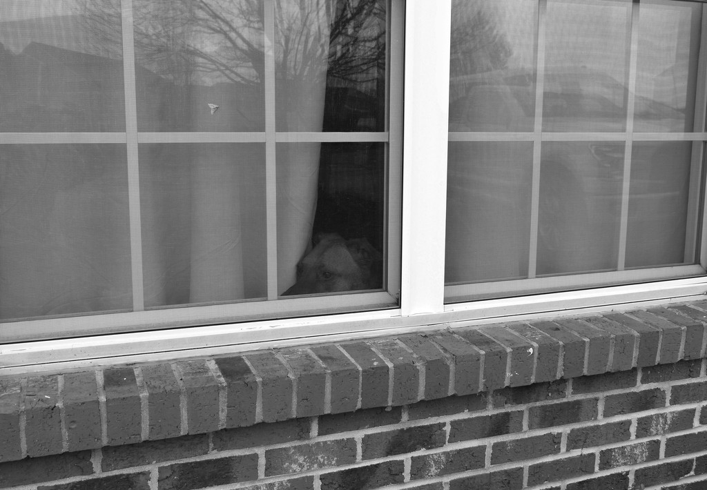 B&W window by homeschoolmom