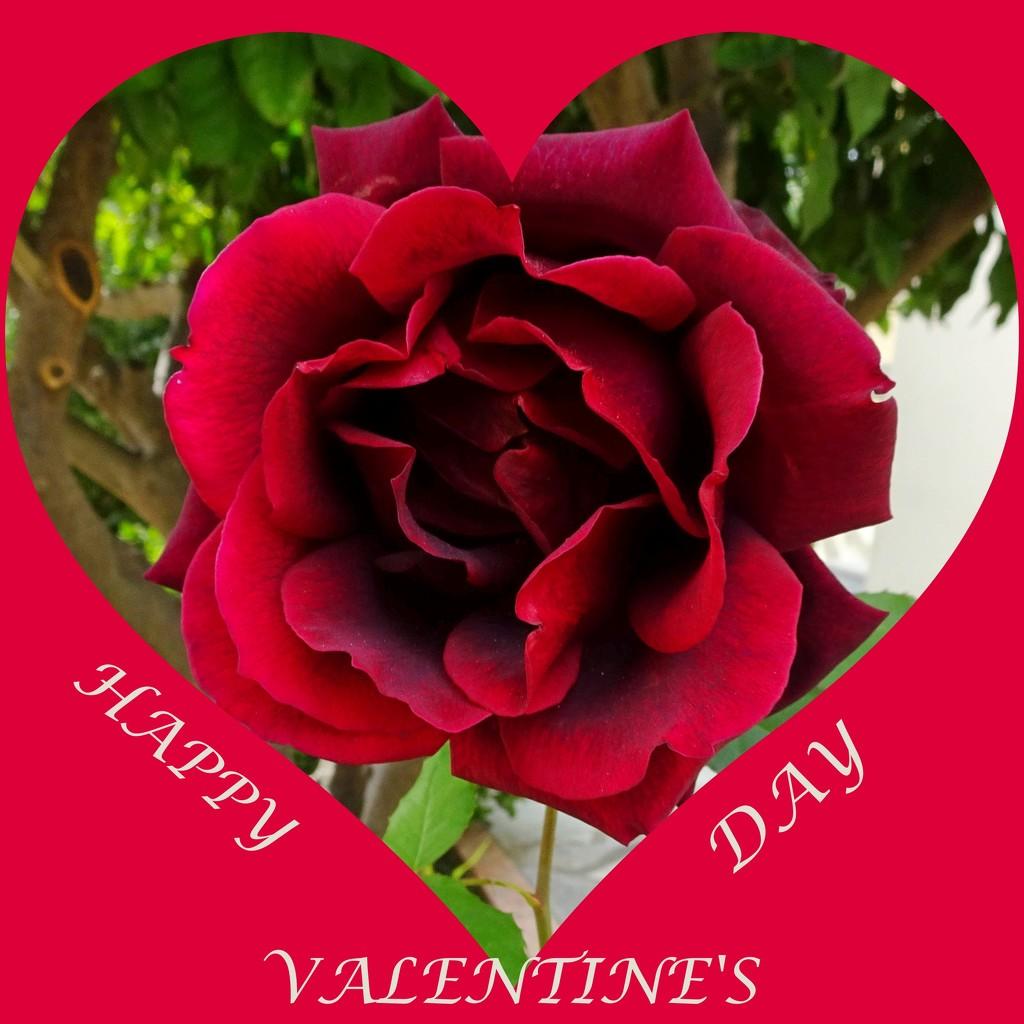 Happy Valentine's Day by carolmw