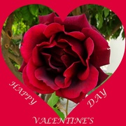 14th Feb 2020 - Happy Valentine's Day