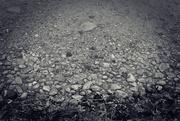 14th Feb 2020 - Lake Bottom Near Shore