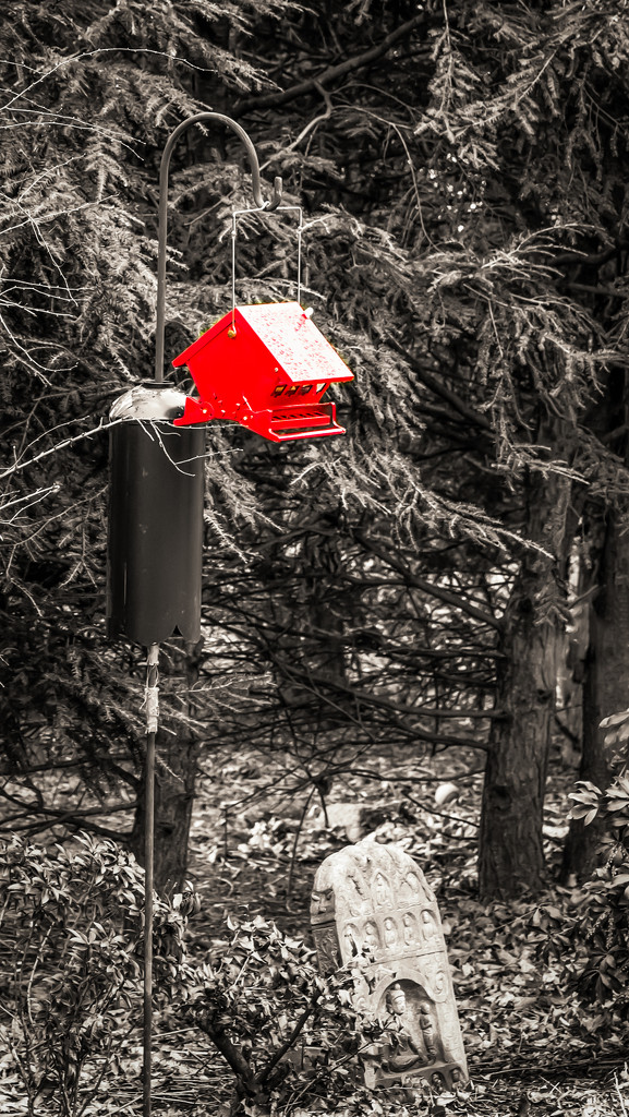 flash of red by jernst1779