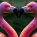 Flamingo Friday '20 06