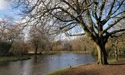 12th Feb 2020 - A walk in the park