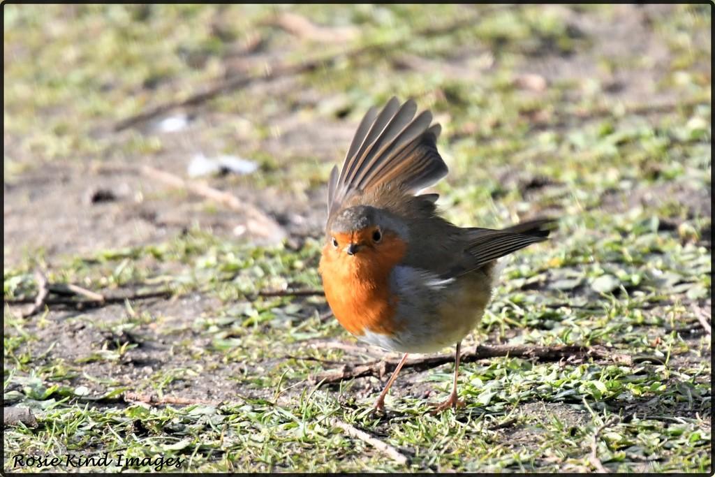 Winging his way by rosiekind