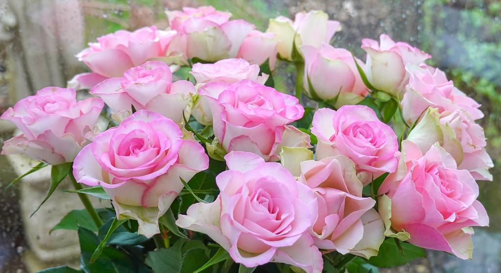Roses. by tonygig