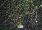 15th Feb 2020 - Road Through the Trees