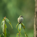 Hummingbird thru the Glass by nanderson