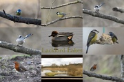 12th Feb 2020 - Bird Watching