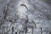 13th Feb 2020 - Winter Weather ETSOOI