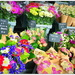 Flower Market...