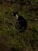 12th Feb 2020 - My cat has a girlfriend