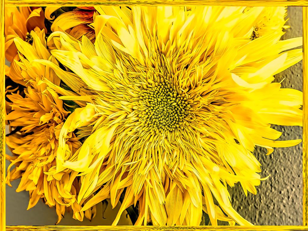 Sunflowers  by ludwigsdiana