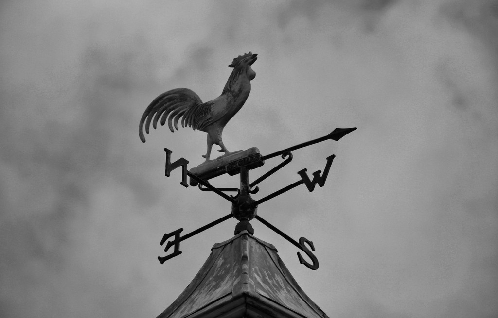 A Glimpse of my Everyday - The Weather Vane by jamibann