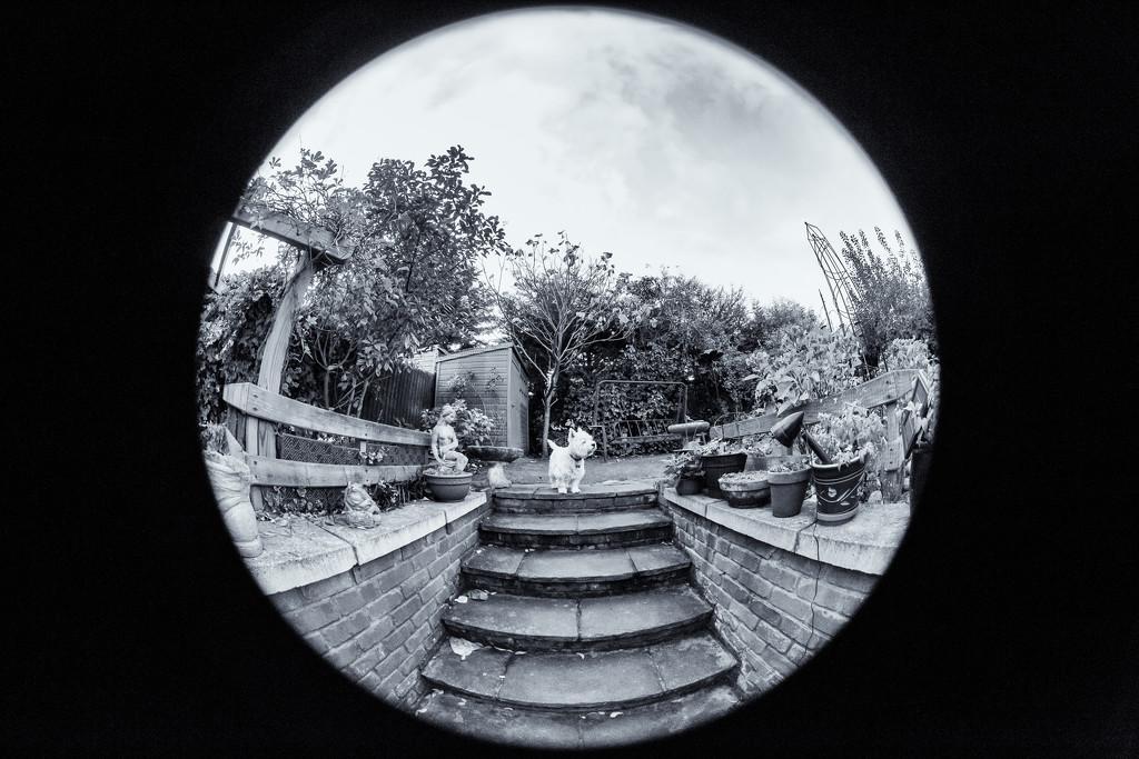 Garden steps by pamknowler