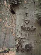 16th Feb 2020 - Lost love?