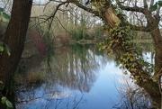 16th Feb 2020 - a walk around South Pond