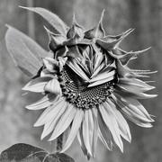 9th Feb 2020 - I Like It In Black And White Too P2010909