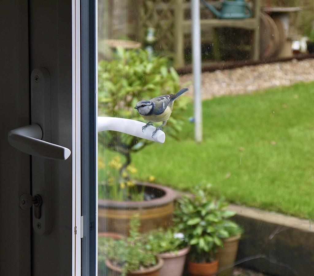 Let me in! by wakelys