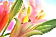 14th Feb 2020 - Valentine's Day Flowers