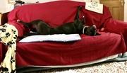 17th Feb 2020 - Long dog!