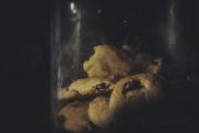 11th Feb 2020 - Biscuits in a Jar