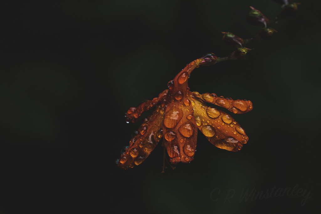 At Last a Drop of Rain by kipper1951