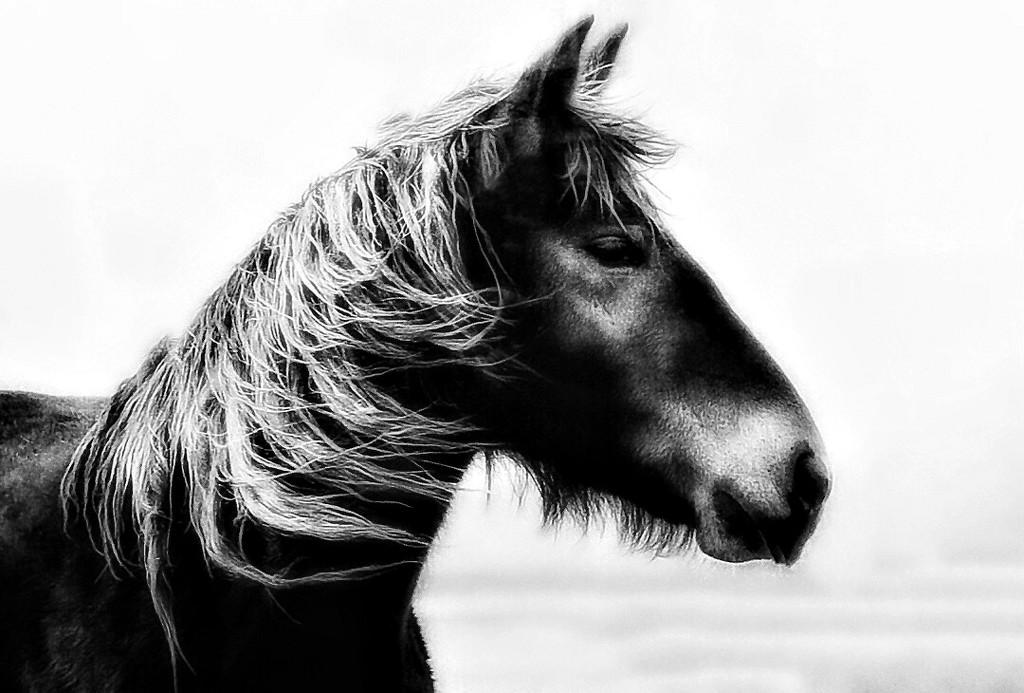 Through a Horses Ears by gardenfolk