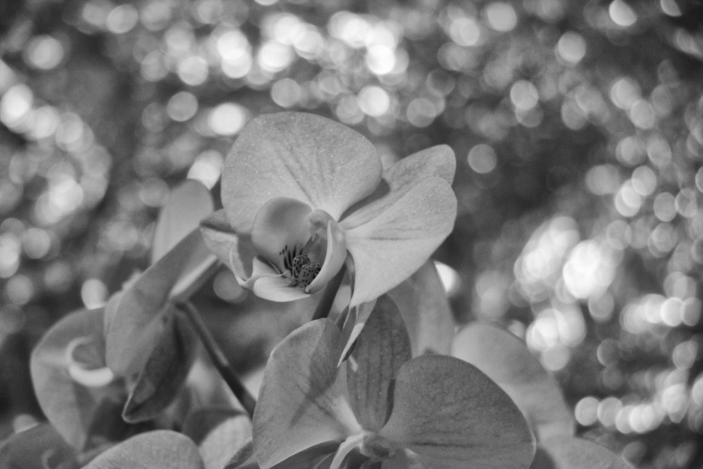 A Glimpse of my Everyday -The Orchid on the Kitchen Table by jamibann