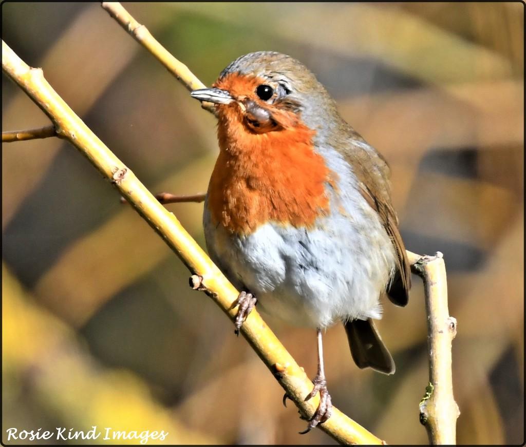 Poor little bird by rosiekind