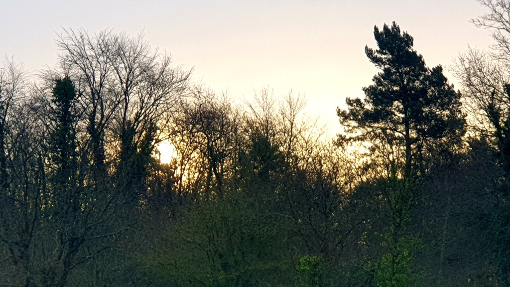 Morning sun through the trees by julienne1
