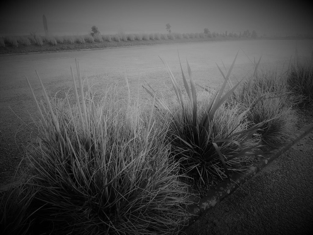 Grasses by etienne