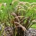 Beautiful Australian Grass ~