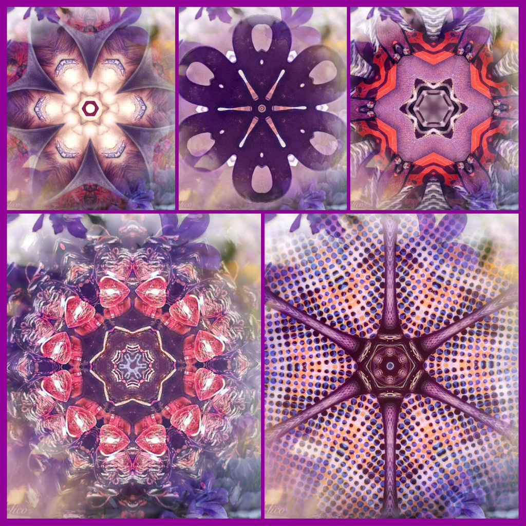 Kaleidoscopes of Color by photogypsy
