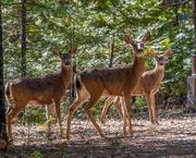 16th Feb 2020 - Deer walk