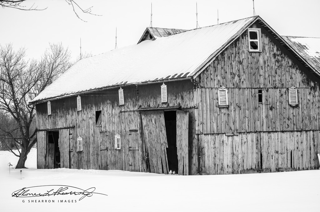 The Homestead Barn by ggshearron