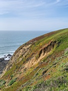17th Feb 2020 - Pacific Coast
