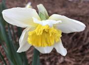 17th Feb 2020 - Spring beauty
