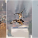 Harrier-Hawk Aerial Combat
