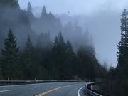 17th Feb 2020 - Foggy 199