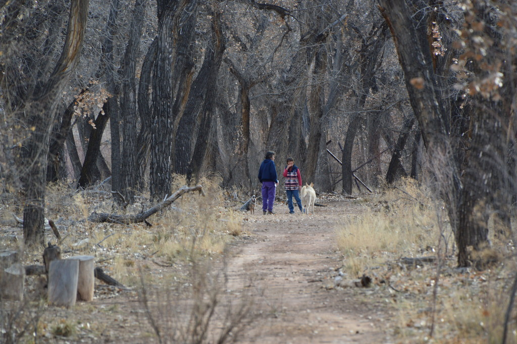 Walking In The Bosque. by bigdad