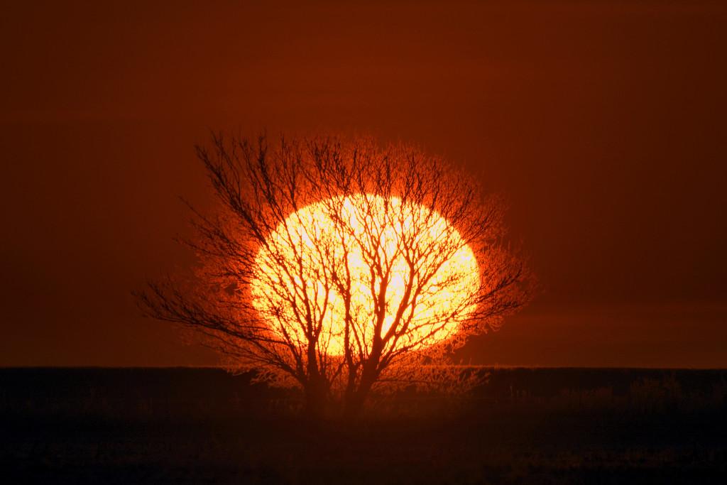 The Burning Tree by kareenking