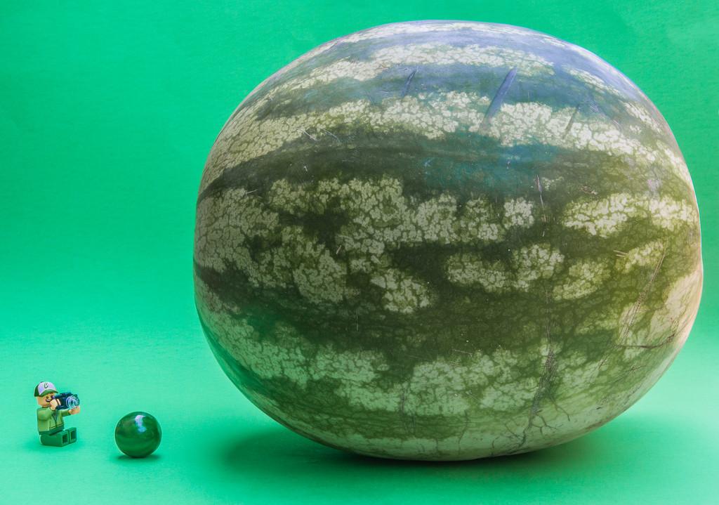 (Day 4) - Watermelon Wonder by cjphoto