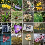19th Feb 2020 - Signs of Spring