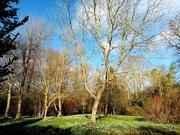 19th Feb 2020 - Hare Park, Chippenham near Cambridge