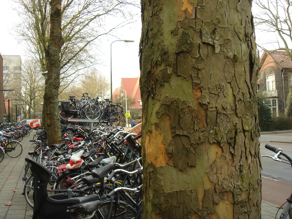 parking place for bicycles by gijsje