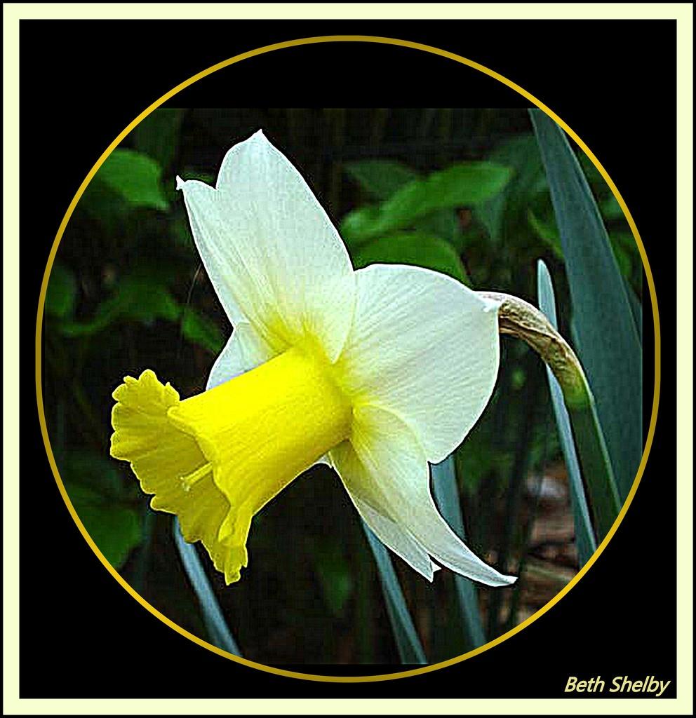 Harbinger of Spring by vernabeth