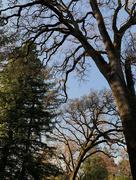 18th Feb 2020 - Harmonious cohabitation of trees